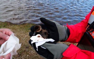 Gran derrame de petróleo en Tierra del Fuego moviliza a autoridades